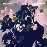 Begonia - Lady In Mind